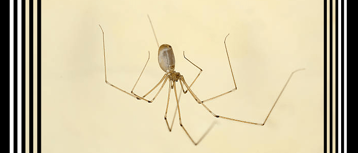 Best Spider Control Exterminators