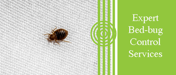 Experts Bed Bug Control
